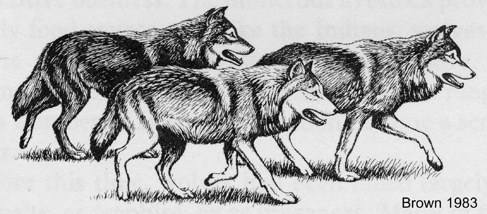 Free wolf Essays and Papers - 123HelpMe com